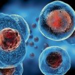 stem cell